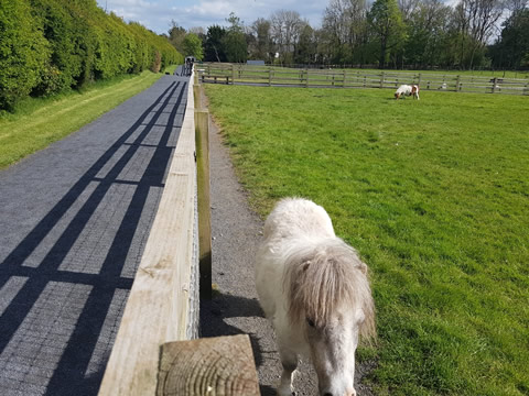 Galway Zoos and Pet Farms